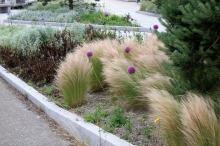 plantes pour un jardin en plein vent