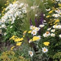 Prairie fleurie (vraie ou fausse)