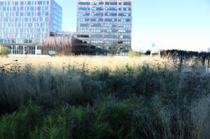 Savane urbaine_0972