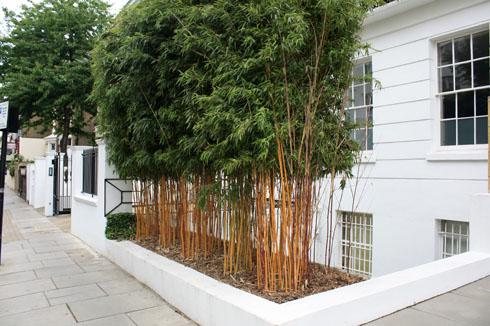 Haie de bambous en ville | Place des Jardins: Le Blog