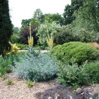 Beth Chatto: un jardin sec... en Angleterre!