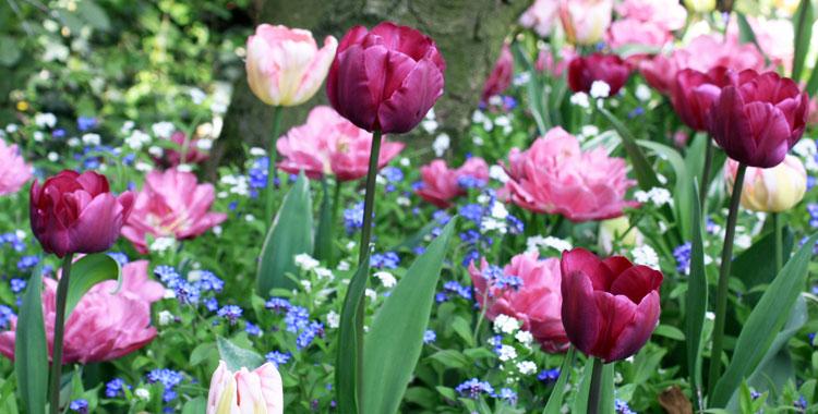 Bulbes de printemps calendrier des plantations place - Printemps place d italie horaires ...