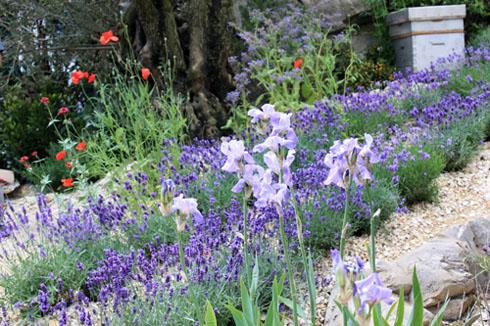 Lavande un air de vacances au jardin place des jardins for Jardin anglais que planter