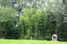 Bambous