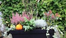 jardinière en hiver
