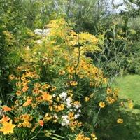 Chambre jaune au jardin!