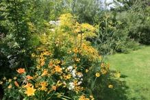 massif de fleurs jaunes