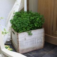 Jardins gourmands pour mini jardins