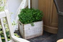 mini jardin aromatique