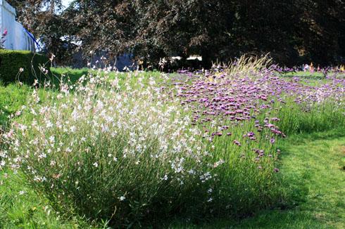 Prairie fleurie d t jusqu en automne place des jardins le blog - Planter de la verveine ...