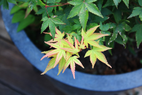 acer-little-princess-20120918-IMG_5750