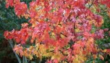 Arbuste aux couleurs d'automne