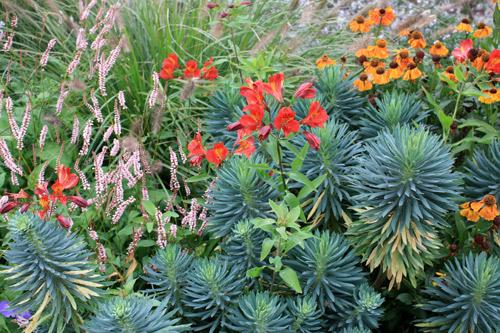 Massif color tendance exotique place des jardins le blog for Plante grasse exterieur rustique