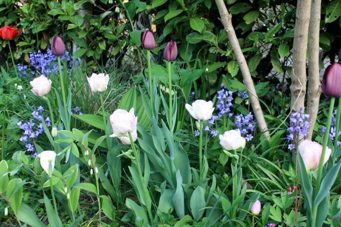 IMG_8136 jardin de printemps