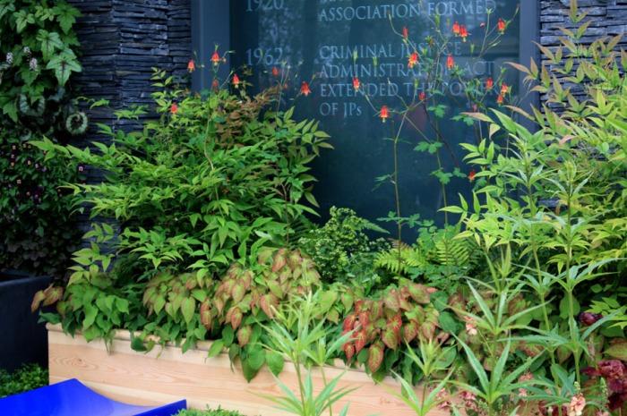 Arbustes en pot