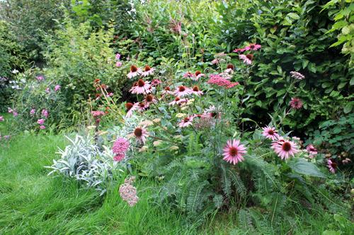 Massif de plantes vivaces roses pour l'été