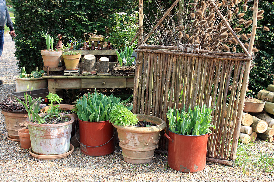 Jardin de bulbes en pot