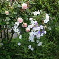 Jardin de curé, jardin d'avenir