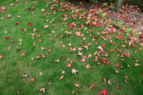 Feuilles d'automne