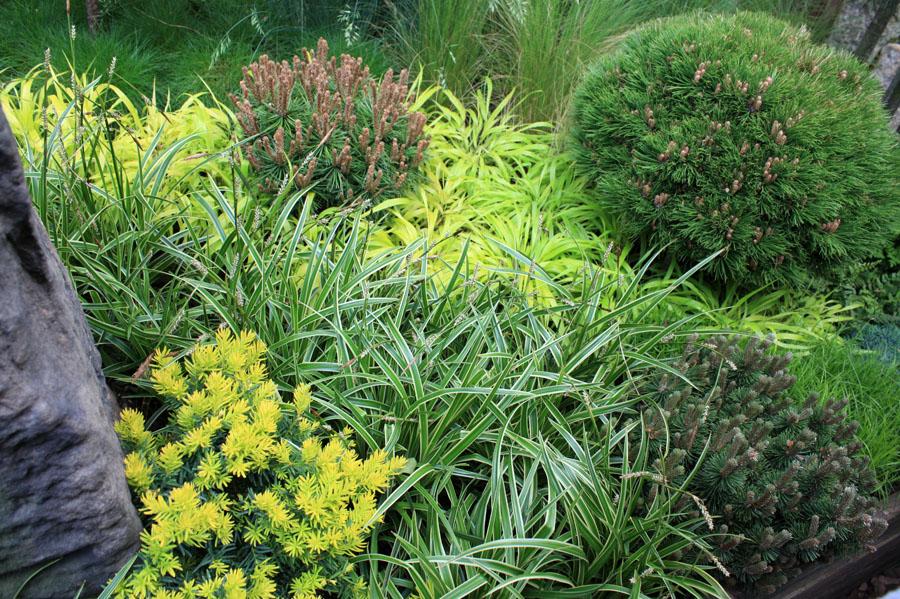 Conifères miniatures: un mini jardin tout vert  Place des ...