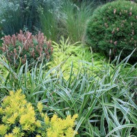 Conifères miniatures: un mini jardin tout vert