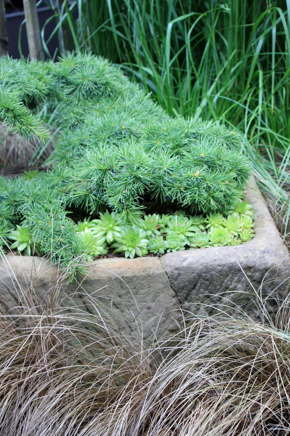 Conifères miniatures: un mini jardin tout vert  Place des Jardins ...