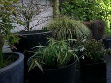 pots en terrasse013