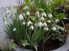 pots en terrasse017
