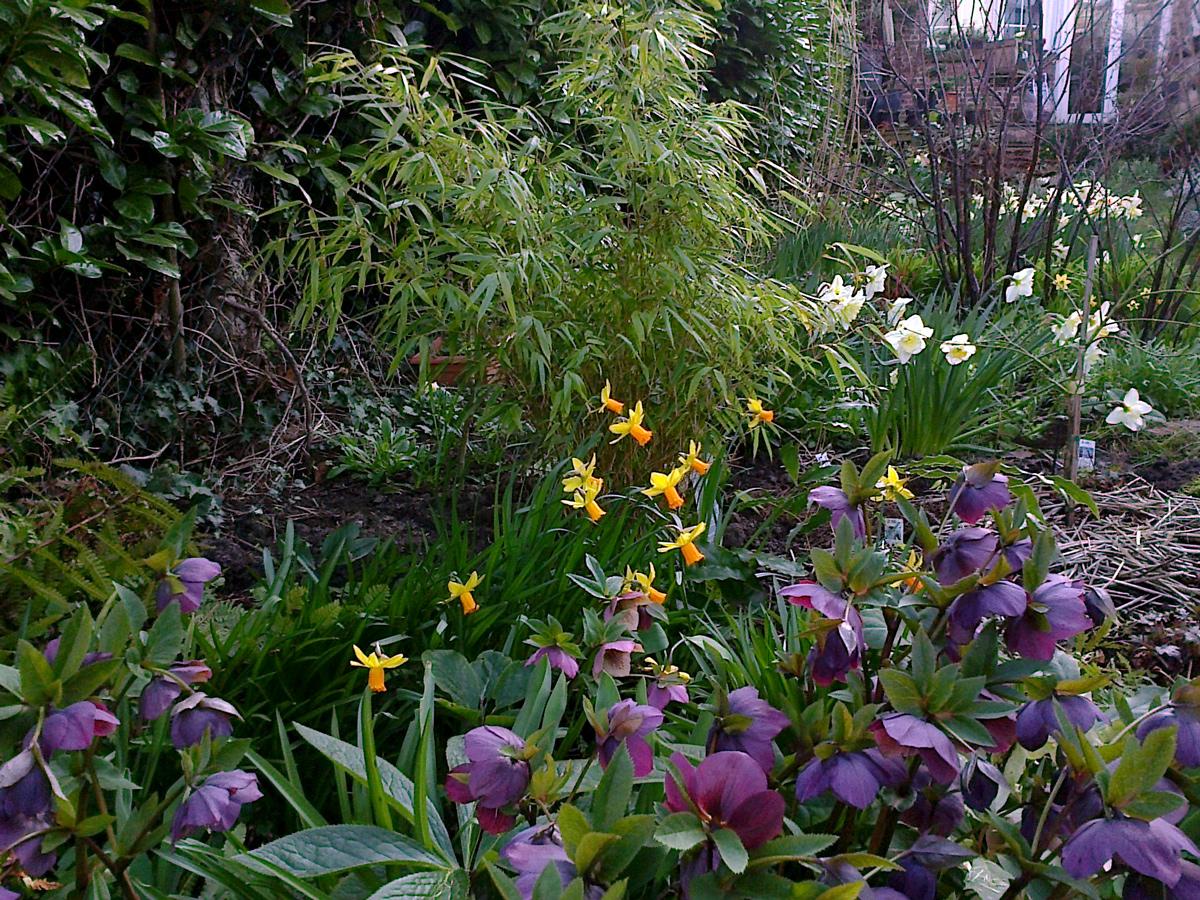 Massif fleuri et gourmand autour d un bambou place des for Bambou dans le jardin
