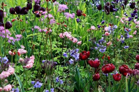 Association de plantes de printemps