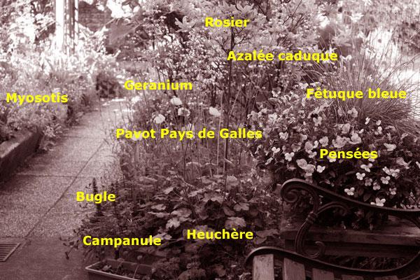 plan de massif pour un petit jardin