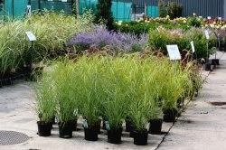 Nos plantes vedettes vues en pépinière