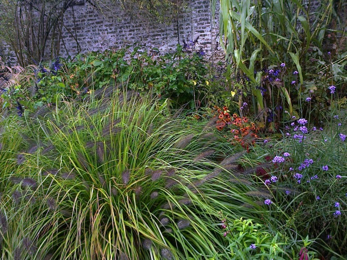 Massif d'automne par excellence: pennisetum, helenium, verveine de Buenos Aires