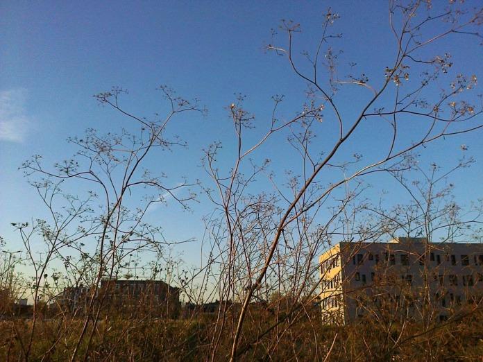 Les plantes se sèment librement