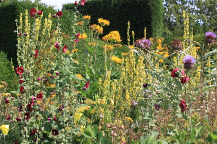 plantes qui se ressèment