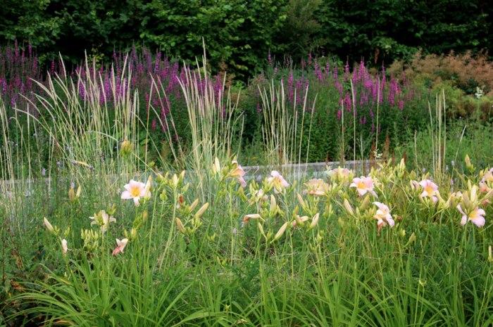 idée de jardin pour sol frais