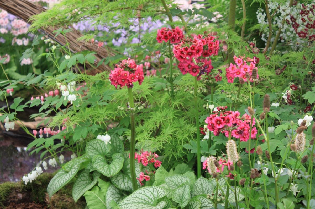 Bordure de printemps au jardin zen place des jardins le for Bordure jardin zen