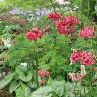 Bordure de printemps au jardin Zen