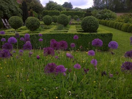 Belle perspective sur le jardin de topiaires, avec les allium qui annonce la couleur, et rappelent les formes sphériques des buis