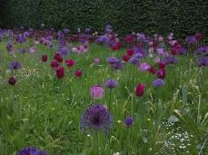 Prairie fleurie dans le jardin des Roses: allium et tulipes