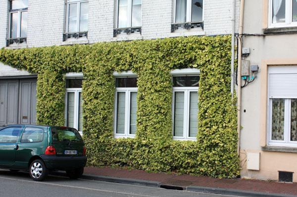 plante grimpante pour façade