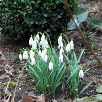 planter en février