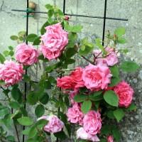 Calendrier du jardinier