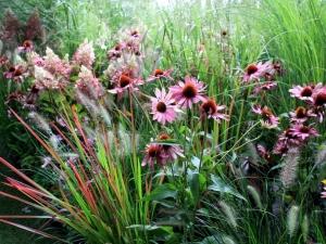 echinacea-hydrangea